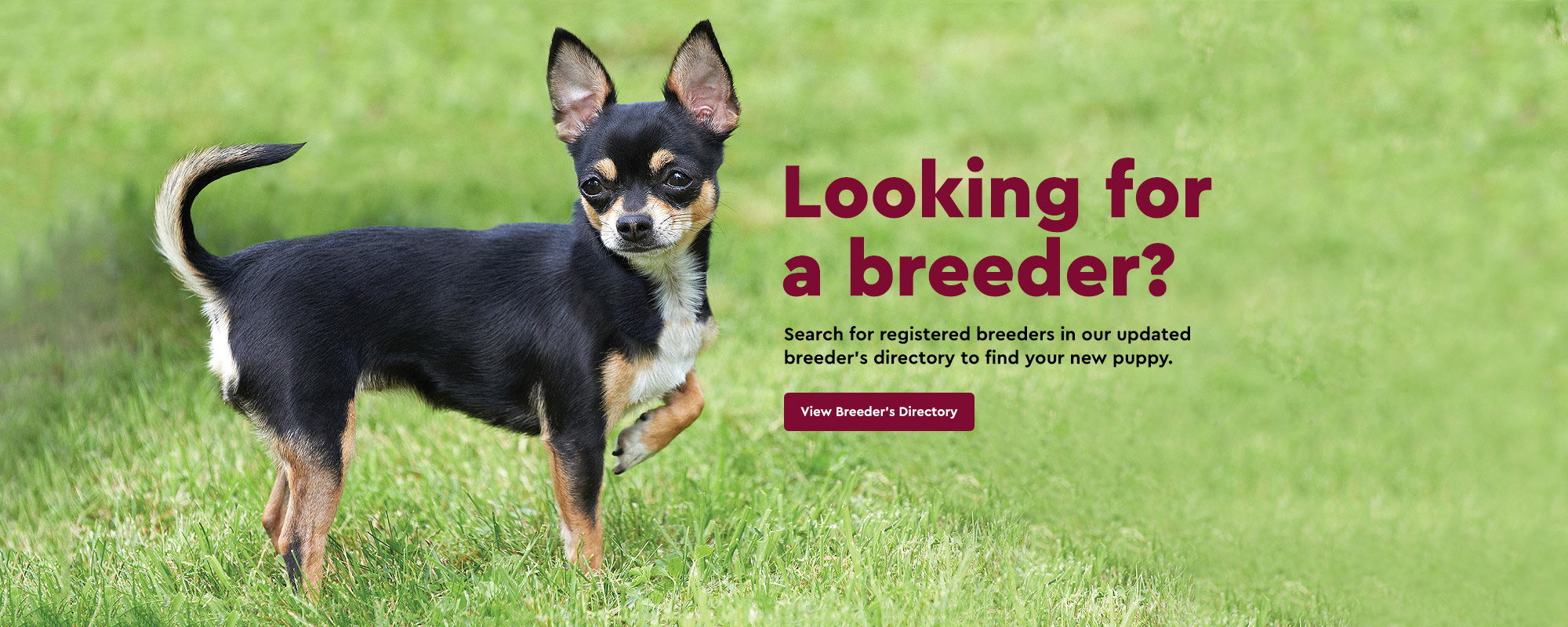 Discover Dogs | London's Biggest Dog Event | 800x2000